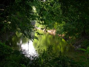 morning-river-1-1545723